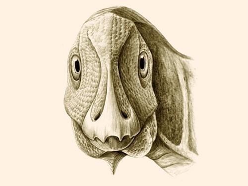 В Трансильвании нашли останки динозавра, страдавшего человеческой болезнью
