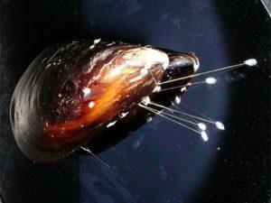 Для фетальных операций будут использовать клей из моллюсков