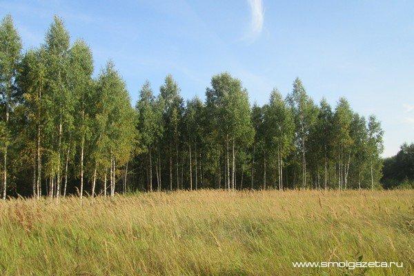 В Смоленской области за неделю от клещей пострадали 22 ребенка