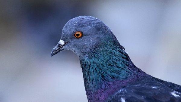 Почти все животные реагируют на магнитные поля