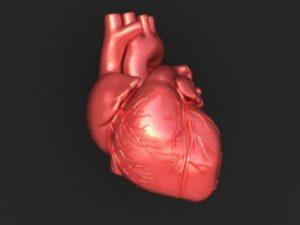 Гормоны, вырабатываемые сердцем, оказывают противораковое воздействие