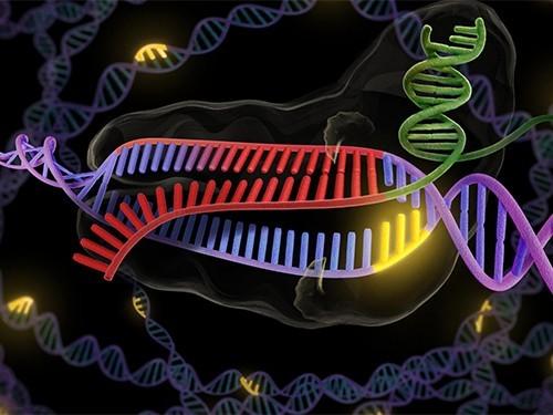 Китайские ученые готовы отредактировать геном первых пациентов