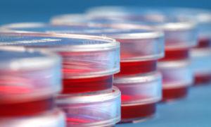 Минздрав подготовил приказ об утверждении регламента по выдаче разрешений на ввоз и вывоз биологических материалов