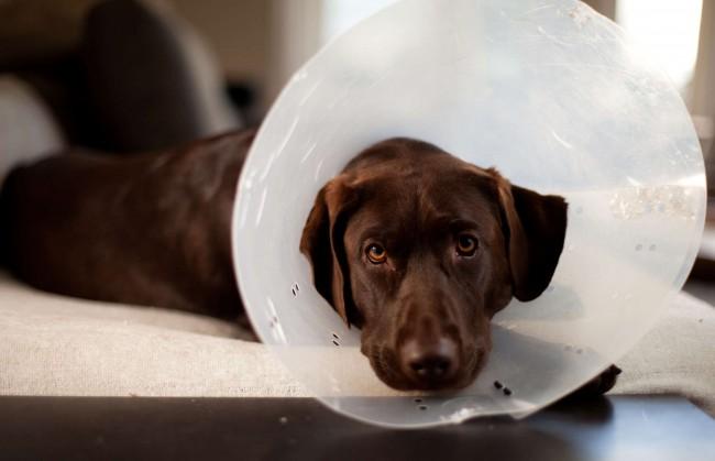 Ветеринария Био-Вет – гормональные исследования и иные анализы по самым лояльным ценам