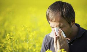 Источники аллергического ринита