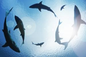 Кровь акул поможет в борьбе с онкологией – ученые