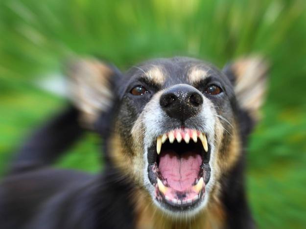 В Смоленской области бешенство выявили у 45 животных