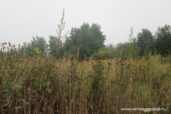 В Смоленской области за неделю от клещей пострадали 54 ребенка