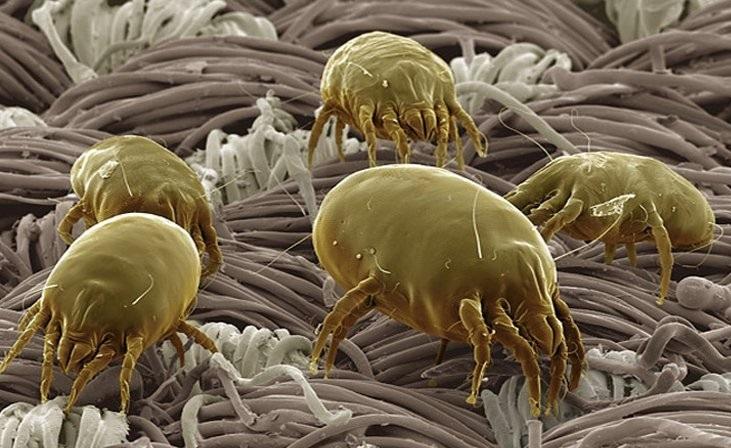 Домашняя пыль вызывает не только аллергию, но и рак