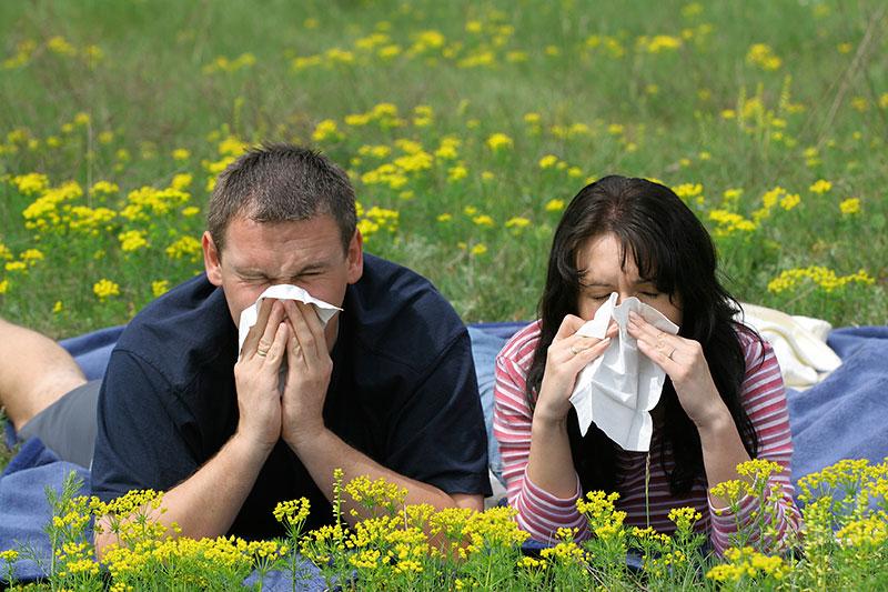 Ученые предлагают новый метод лечения аллергии