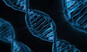 Открыта молекулярная загадка старения