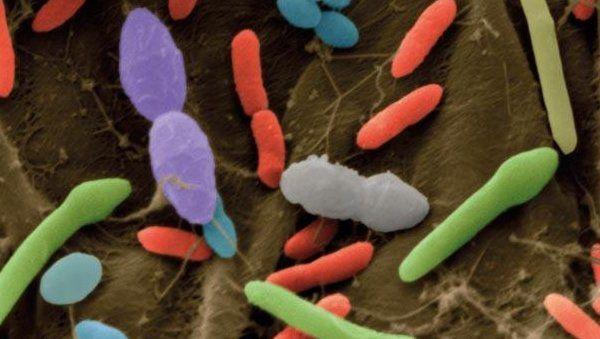Ожирение и сахарный диабет победит кишечная бактерия?