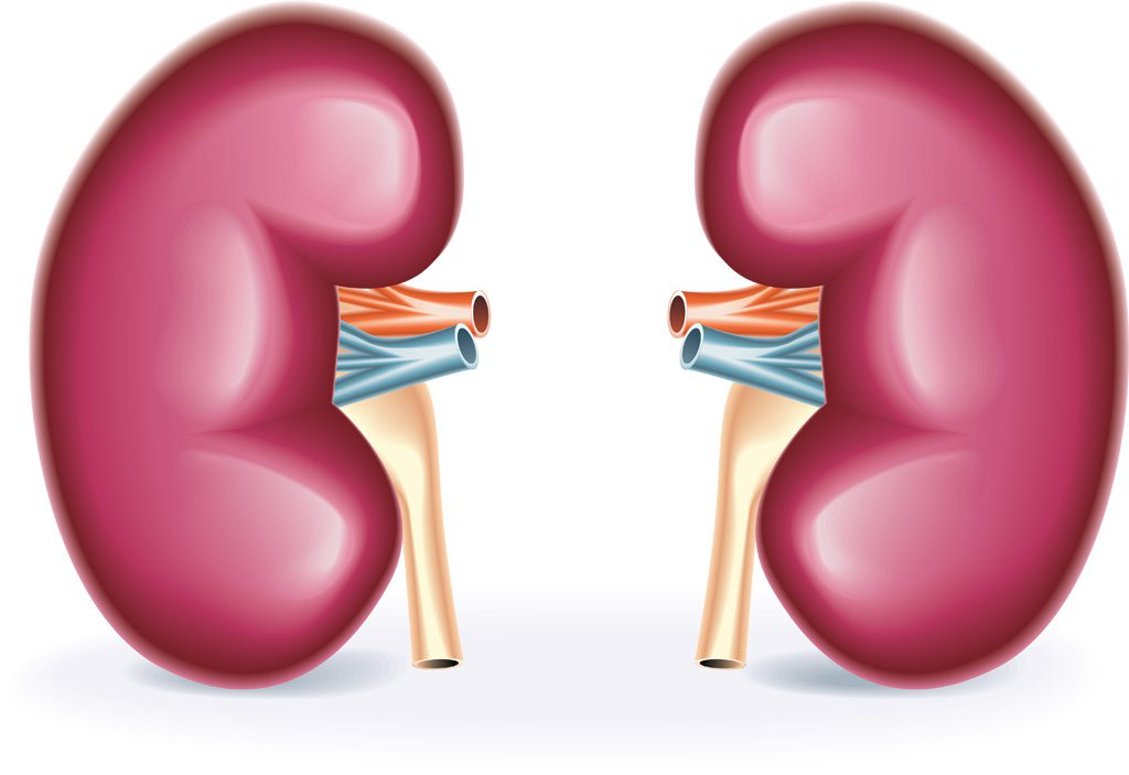 Влияние возраста донора почки на отдаленный исход трансплантации: новые данные