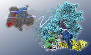 Ученые выявили новый молекулярный механизм старения