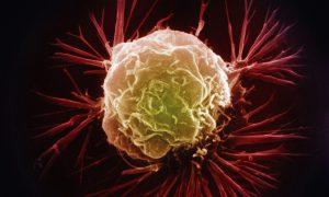 Рак смогут лечить отключением белка