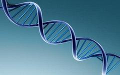 Ученые предлагают снять запрет на создание генетически измененных людей