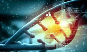Расшифрован критический участок генома человека