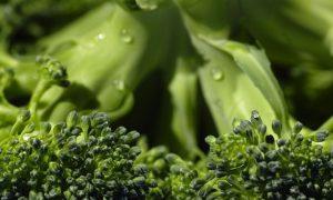 Ученые объяснили противораковый эффект брокколи