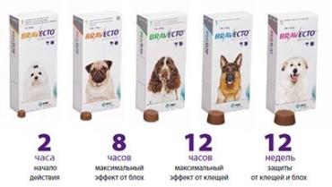 Таблетки Бравекто от клещей на портале zoomenu.ru