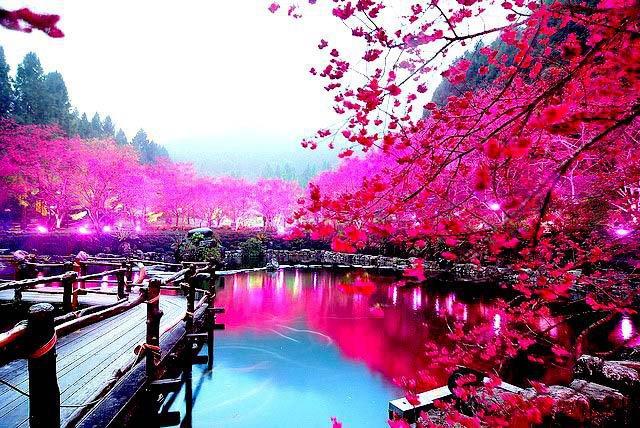 Туризм в Японию