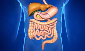 Диета для здорового пищеварения