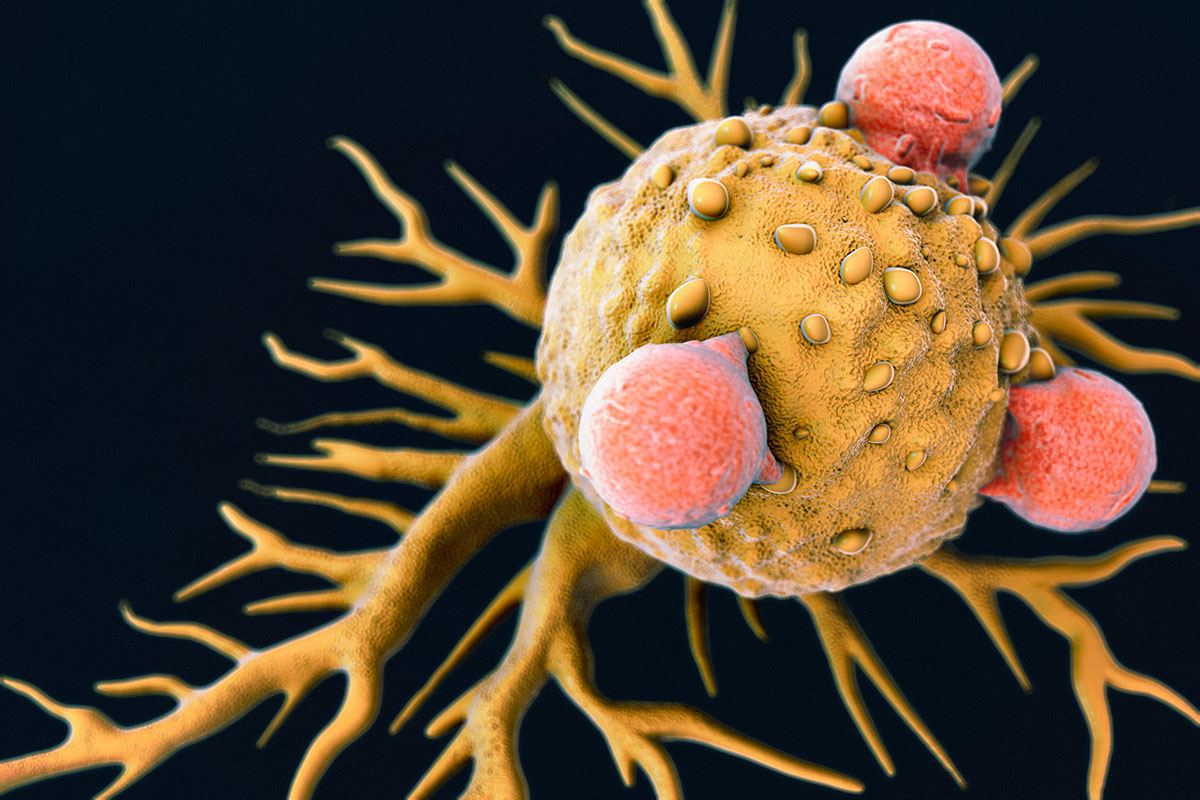 Рак создали сами люди