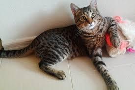 Подробности о гостиницах для кошек