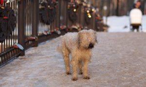 13380 собак и кошек привили от бешенства в Смоленске с начала года