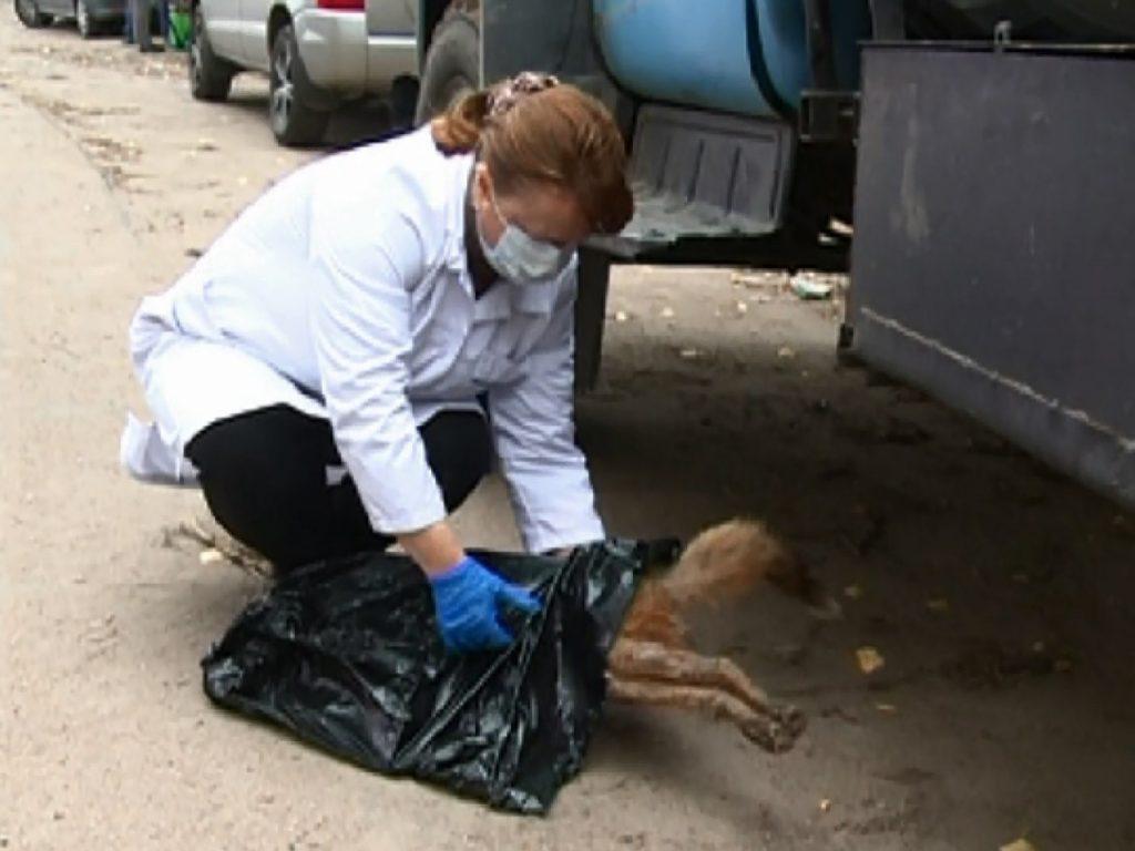 Смоленские ветеринары предупредили об опасности бешенства