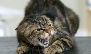 В каких районах Смоленской области у животных выявили бешенство