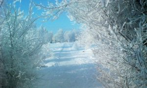 Какая погода ждет смолян 27 февраля