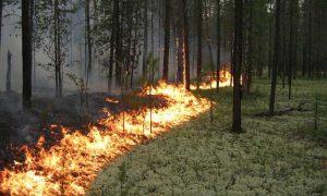 В апреле в лесах Смоленской области возможно возникновение пожаров