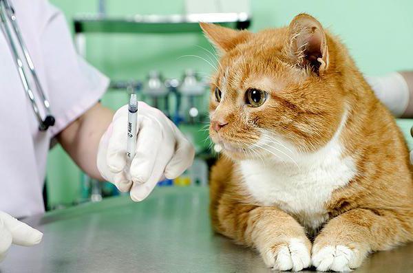 Стал известен график вакцинации домашних животных в Смоленске