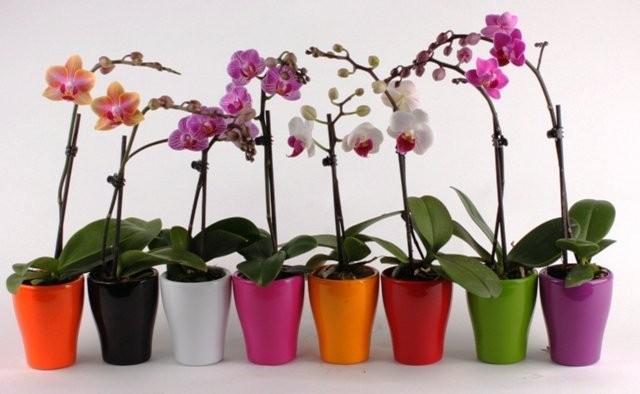 Основные правила ухода за орхидеями
