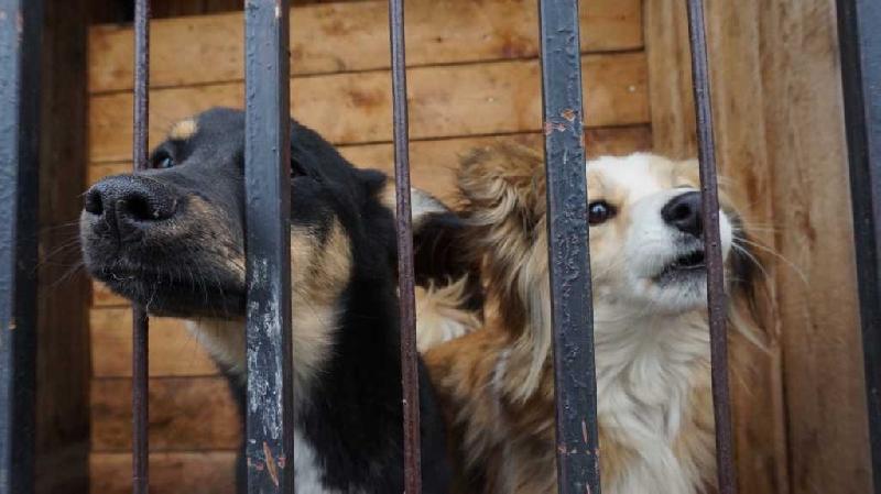 В Смоленске работает ветеринарный пункт временного содержания безнадзорных животных