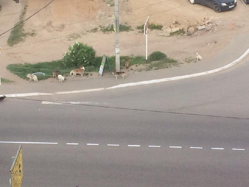 В райцентре Смоленской области бродячая собака напала на ребенка