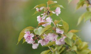В Смоленской области 31 мая заметно похолодает