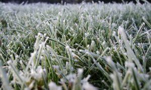 В Смоленской области 1 июня обещают мороз в летнюю ночь