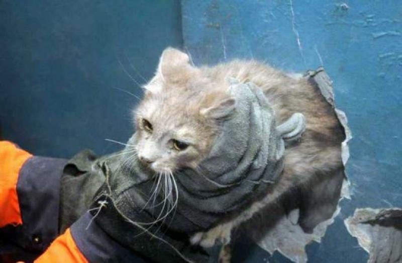 В Смоленском районе спасли котенка, который три дня не мог выбраться из вентиляционной шахты