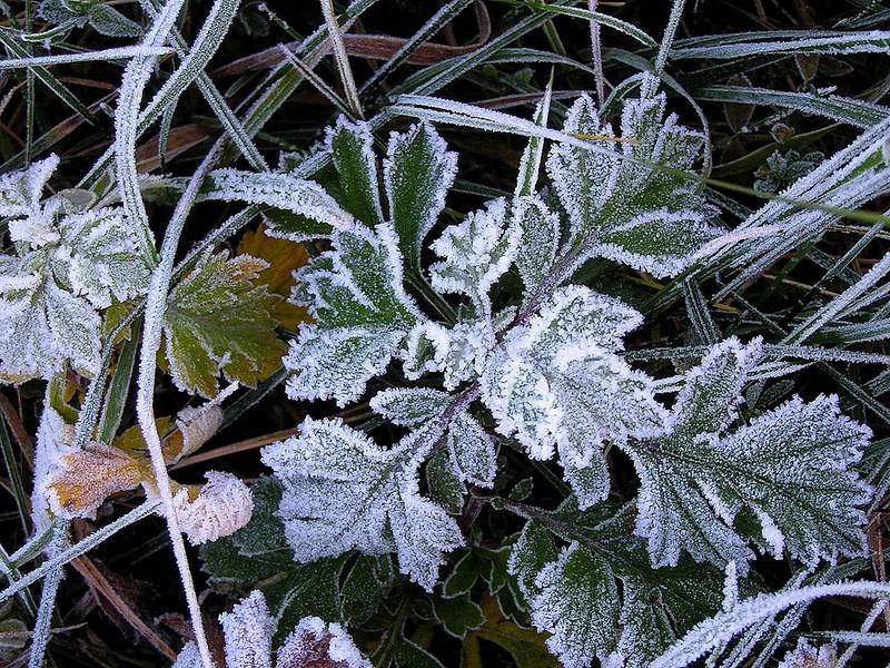 МЧС предупреждает смолян о заморозках