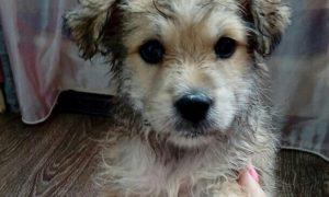 Смолянка спасла из воды щенка, которого пытались утопить хозяева