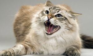 В райцентре Смоленской области бешеный кот напал на человека