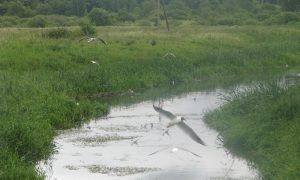 Стали известны причины гибели рыбы в реке в Смоленской области