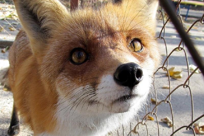В каких районах Смоленской области у животных чаще всего выявляют бешенство