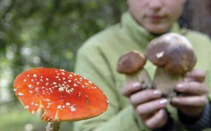 Смолянам рассказали, как не отравиться грибами