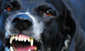В Смоленской области бешеный пес покусал человека