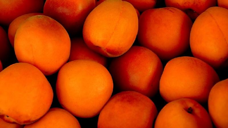 В Смоленскую область не пустили зараженные абрикосы