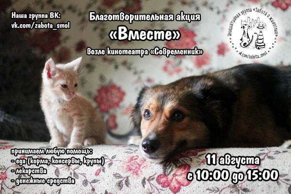 В Смоленске пройдет благотворительная акция «Вместе» в помощь бездомным животным