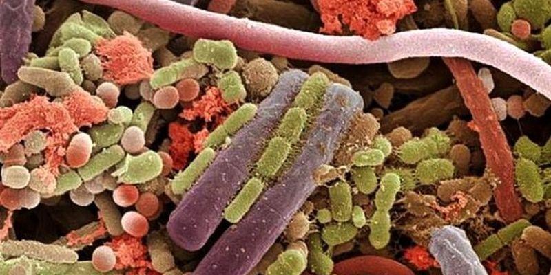 Назван эффективный способ улучшения микрофлоры кишечника