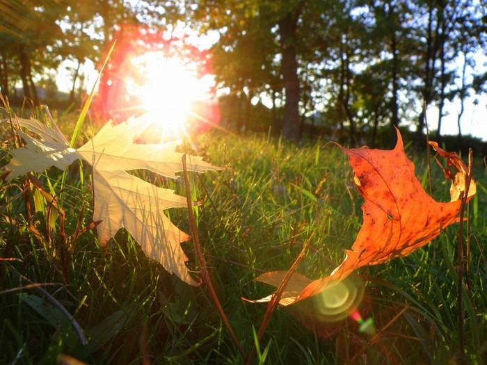 В Смоленской области в пятницу обещают температурные качели